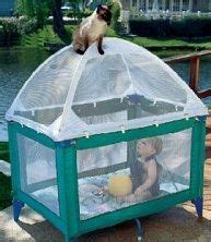 Crib Cat Tent by 1000 Images About Ideas For Cats On