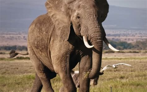 elephant ivory inspiring and insightful articles to powerfully shape your