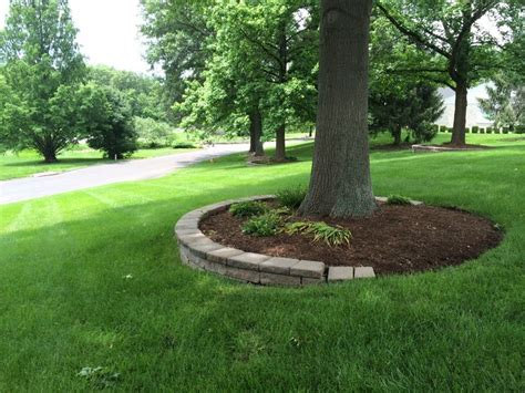Backyard Tree Ideas Mulching Around Tree Rings For Our Front Yard Tree My Outdoor Oasis Front
