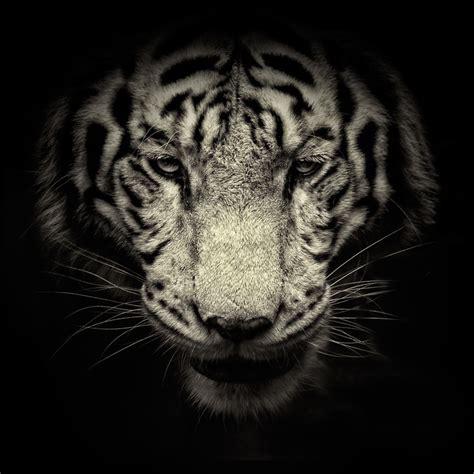 imagenes en blanco de animales fotograf 237 as de animales salvajes por alex stephen te