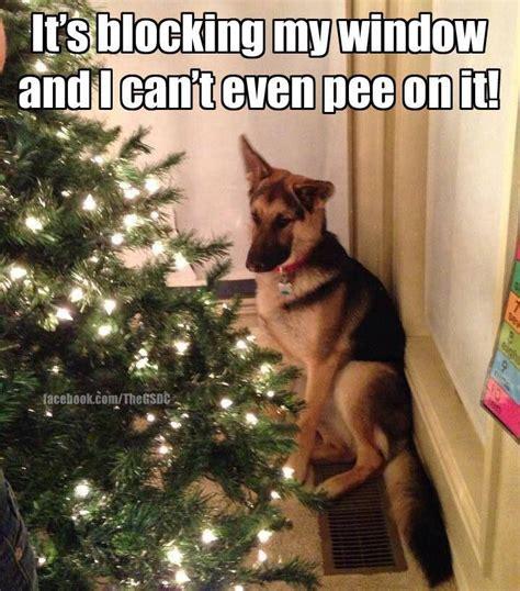 Christmas Dog Meme - dog humor funny pinterest