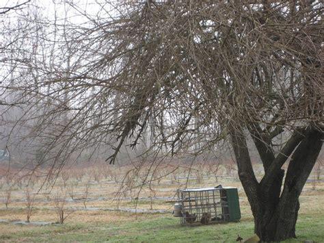 tree farms richmond va barry s berries jan s jams at tree hill farm