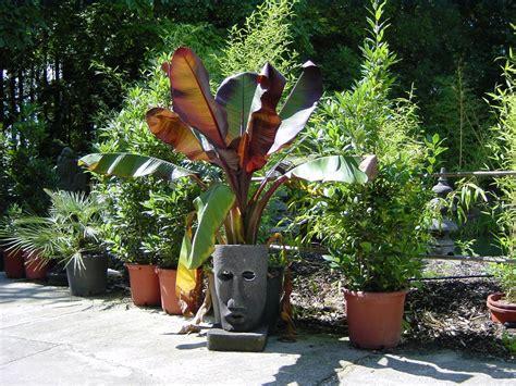 Pflanzen Für Blumenkästen by Bepflanzung Balkon Idee