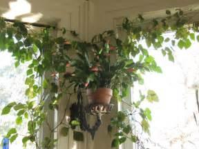 Beautiful House Plants foliage plants require light flowering plants demand sun is still
