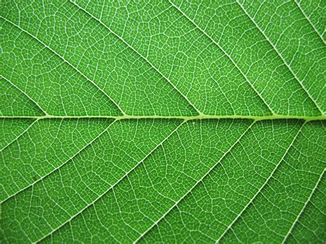 texture leaf pattern writing prompt all about a leaf lita kurth draft