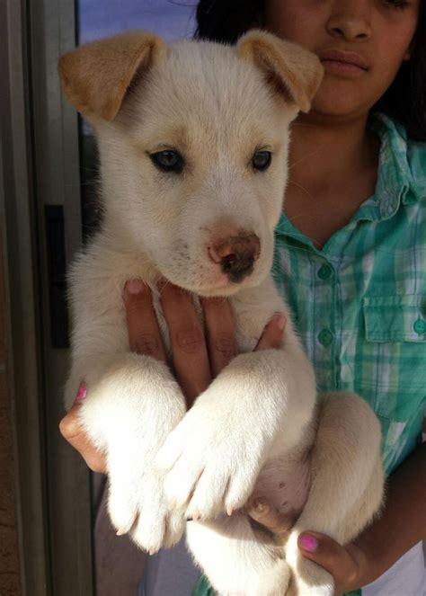 adoption az arizona small rescue az rescue animals autos post