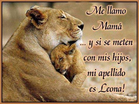 imagenes de leones con sus cachorros leones en peligro de extinci 211 n y video con kevin