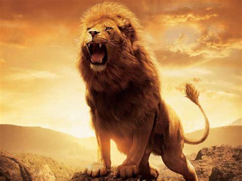 imagenes chidas de leones los fondos de pantallas mas chidos fondos de leones