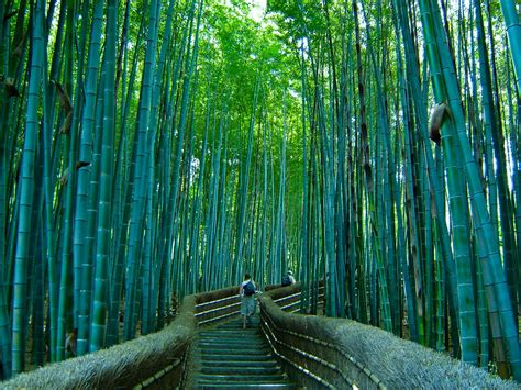 imagenes bambu japones bosque de bamb 250 en japon