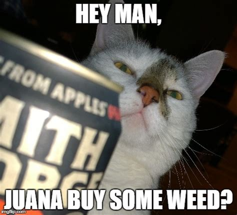 Cat Cocaine Meme - drug dealer cat imgflip