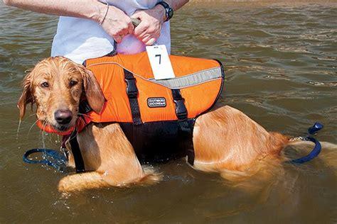 dog boat clothes life jackets for dogs boatus magazine