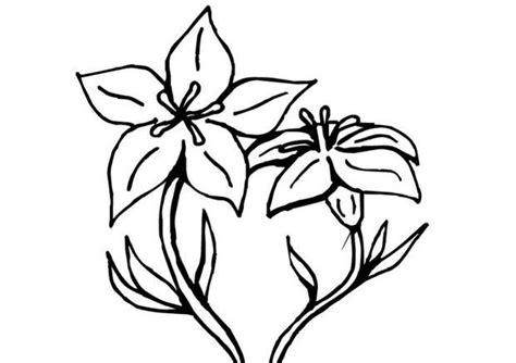 Vase With Flowers Coloring Page Coloriages Coloriage De Fleurs De Gentiane Fr Hellokids Com