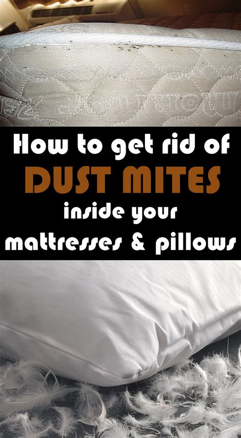 How Do I Get Rid Of A Mattress by How To Get Rid Of Dust Mites Inside Your Mattresses And Pillows 101cleaningtips Net