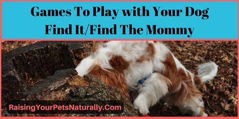 games to play with your dog in the house games and activites for dogs games to play with your dog find it hide and seek