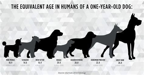 puppy years flaws in the 7 year rule how accurate are quot years quot dogtime