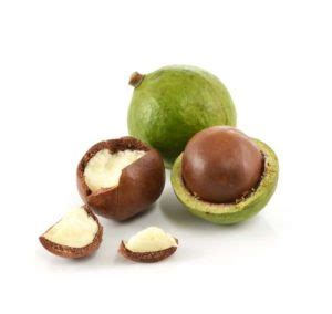 what nuts can dogs eat macadamia nuts for dogs 101 can dogs eat macadamia nuts
