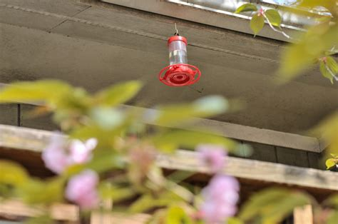 how to fill and hang a hummingbird feeder