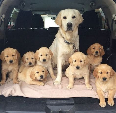 7 in 1 for puppies tuesday s best it s not easy keeping up with 7 puppies but is managing