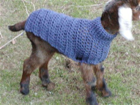 cute goat pattern cute baby goats in sweaters