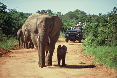 5 Safari Stuff To See by 5 Things You Need To Before Your Safari Trip