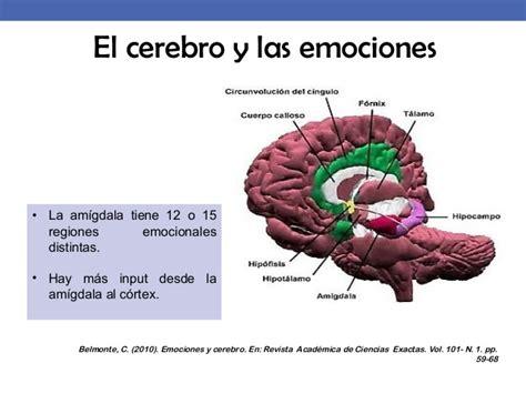 el cerebro obeso las 1503139301 2015 desarrollo emocional