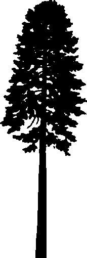 douglas fir firs and silhouette on pinterest