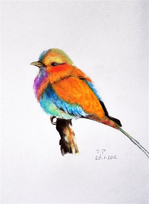 bird art drawing birds 1782212965 prismaticcolours on etsy colored pencil etsy colored pencils and exotic birds