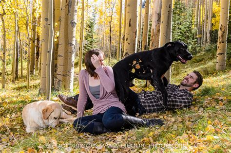 engagement photos with dogs 12 dogs hilariously ruining engagement photos rover