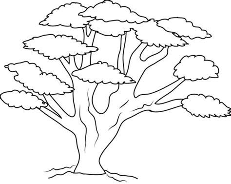 mahogany tree coloring page disegni degli alberi da stare i pi 249 belli per colorare
