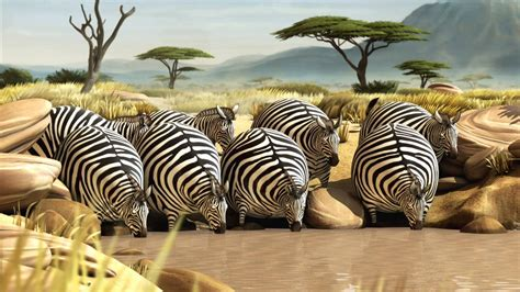 Fat Zebra Animated Animal Photo ? Images, Photos, Pictures