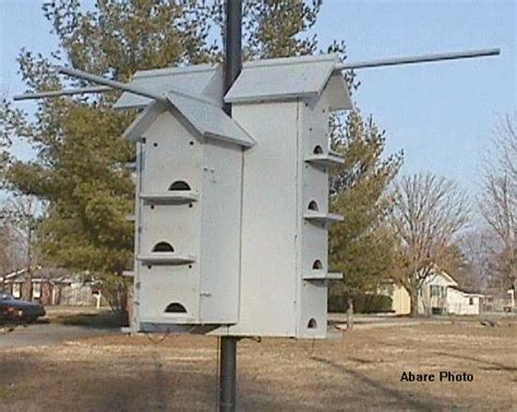 plans for purple martin house facts about purple martins