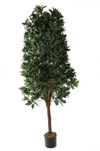 pyramid topiary tree buy artificial 6ft bay tree pyramid topiary artificial