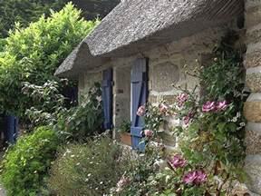 Climbing Rose Plants For Sale - a joyful cottage cottage shutters and window boxes