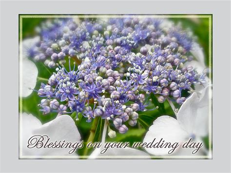 wedding blessing nature blessings on your wedding day card blue lace cap