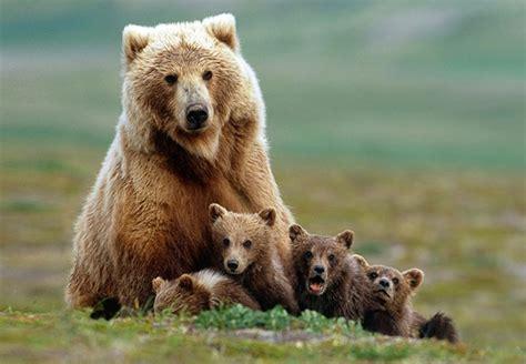 imágenes de animales insectívoros animales fotos dibujos imagenes fotos de osos fotos de