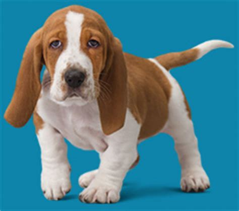 Home Plans With Price To Build by Puppy Wellness Plans Optimum Wellness Plans Banfield
