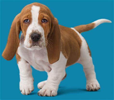 puppy wellness plans optimum wellness plans banfield