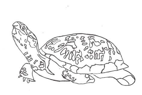 girl turtle coloring page free printable turtle coloring pages for kids