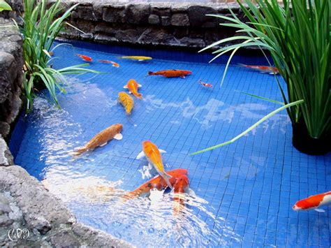 koi fish pond design and installation living water landscape
