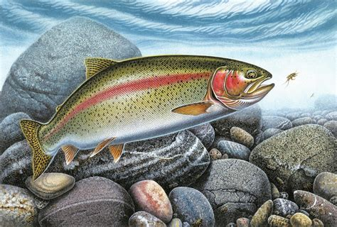rainbow trout stream painting by jq licensing