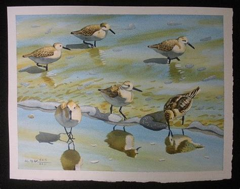 painting the sea people and birds with watercolor basics 413 best images about coastal birds on pinterest