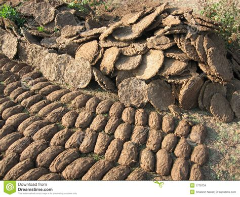 cow poop house india travellerspoint travel photography cow dung the best natural fertiliser stock images image