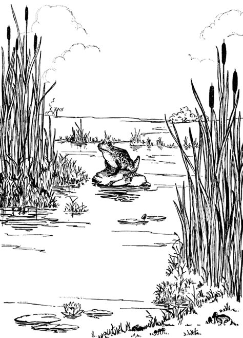 frog habitat coloring page pond ecosystem clipart 24