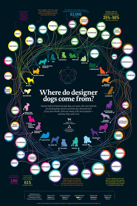 where do dogs come from about infographics and data visualization cool infographics