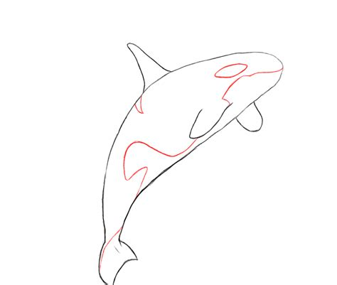 whale pattern drawing how to draw a killer whale draw central