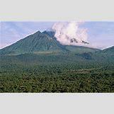 Mountain Gorilla Habitat   304 x 191 jpeg 14kB