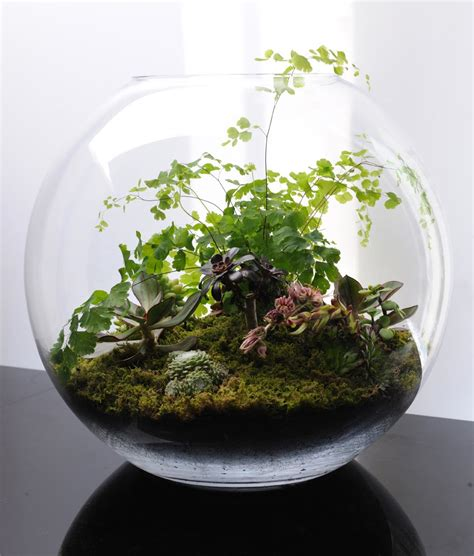Handmade Terrariums - terrariums fish bowl gardening what s on jimmy b s mind