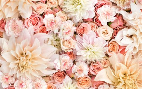 wallpaper flower pastel dahlias roses and carnations in pastels wallpaper and