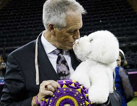 westminster show 2018 westminster show 2018 winner pictures bichon frise wins best in show world