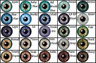 eye colors chart eye color chart from search writing